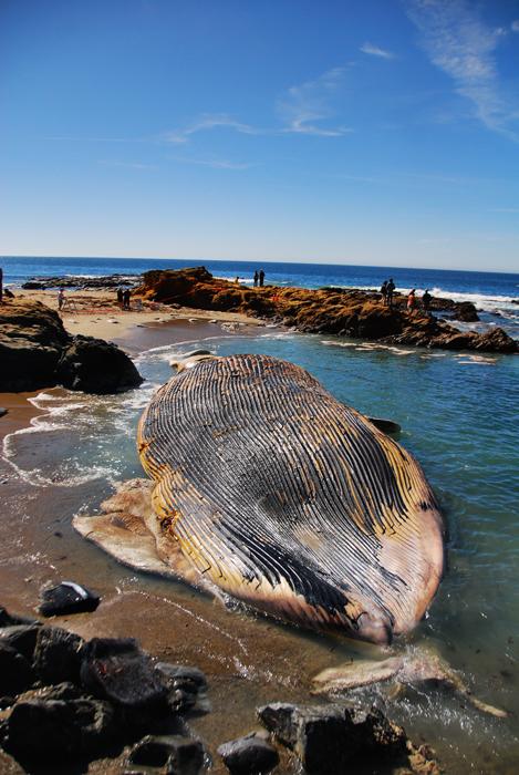 Whale8s